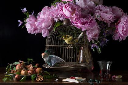 Paulette Tavormina: A Concert of Birds