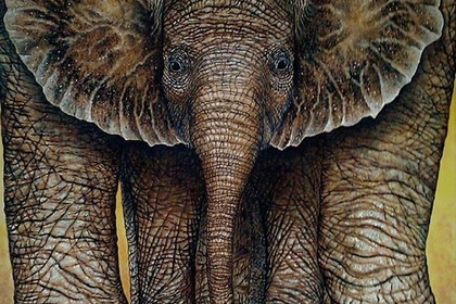 """7th Annual """"Animals"""" Online Art Exhibition"""