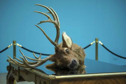 A TALEBEARER'S TALE : The Last Deer