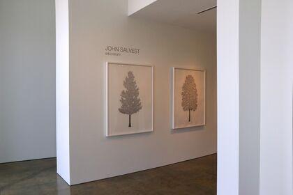 John Salvest | Arboretum