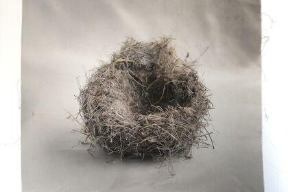 """Kate Breakey """"Nests"""""""