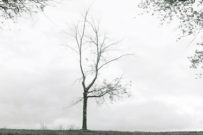 Masako Miyazaki: 木 - A tree -