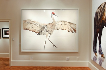 The Choreography of Cranes: A Study of Motion