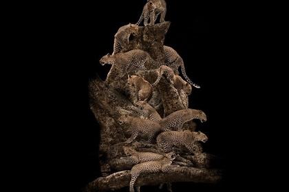 Makonde - Tree of Life - Photographs by Mario Arroyave