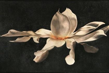Reprieve: The Gospel of Beauty