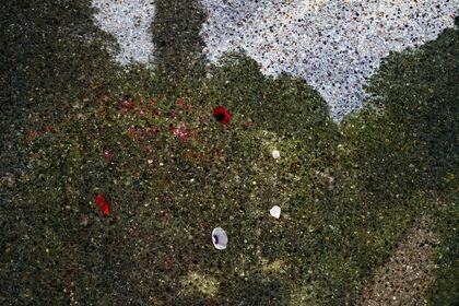 Abelardo Morell: After Monet