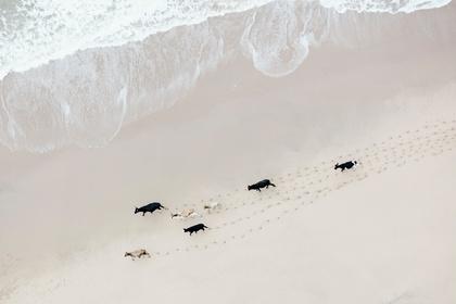 Zack Seckler | South Africa