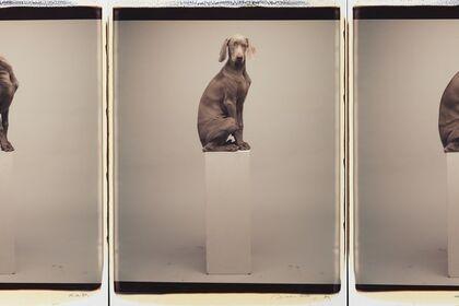 William Wegman: Polaroids