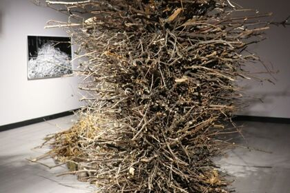 THICKET, featuring the work of Penelope Stewart