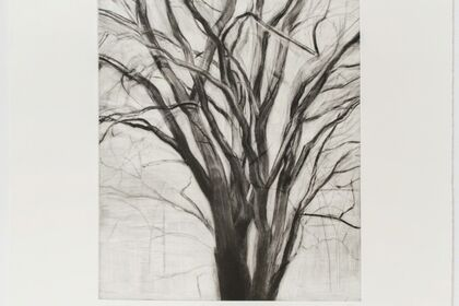 Sylvia Plimack Mangold: Winter Trees