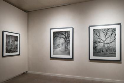 Michael Masaaia-Deep in a Dream, Central Park