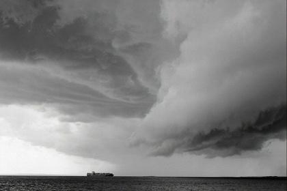 Mitch Epstein / New York Trees, Rocks & Clouds