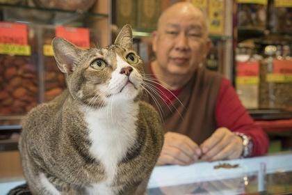 HONG KONG SHOP CATS