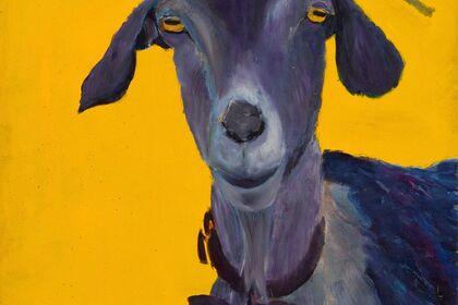 Benforado's Goats