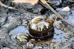 SNAP: Oil/Air/Water