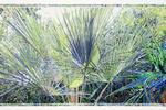 Joseph Raffael's Prismatic Watercolors Celebrate the Beauty of the Natural World