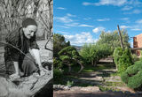 How Georgia O'Keeffe's Garden Keeps Growing, Three Decades after Her Death