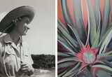 When Georgia O'Keeffe Went to Hawaii to Paint Pineapples for Dole