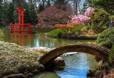 Brooklyn's 100-Year-Old Japanese Garden Is Like a Living Painting