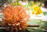 These 100-Year-Old Glass Flowers Are So Accurate, They Rival the Real Thing