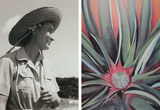 The Artsy Podcast, No. 61: When Georgia O'Keeffe Went to Hawaii to Paint Pineapples for Dole