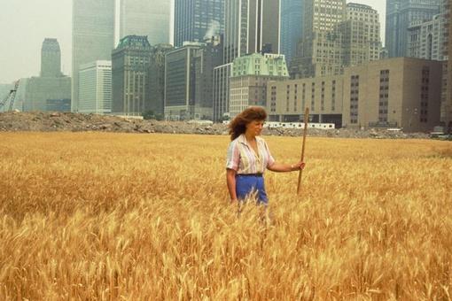 Agnes Denes's Manhattan Wheatfield Has Only Grown More Poignant