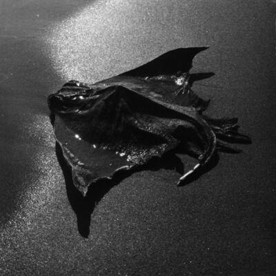 Lucien Clergue, 'Raie échouée', 1965