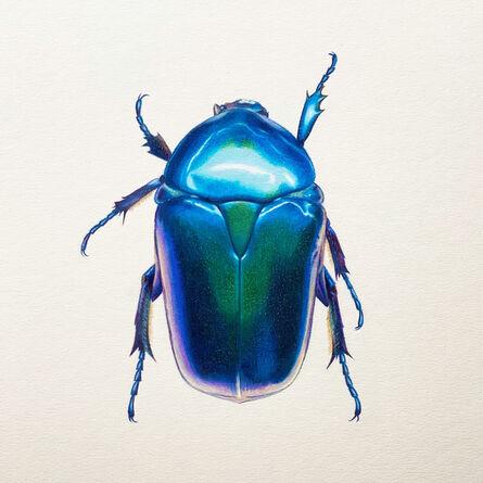Hannah Hanlon, 'Coleoptera Chroma #20', 2020