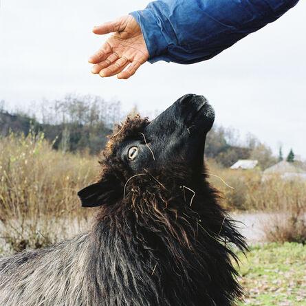 Tessa Bunney, 'Livestock Market (Bogdan Voda, Romania)', 2003