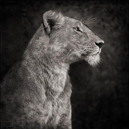 Nick Brandt, 'Portrait of Lioness against Rock', 2007