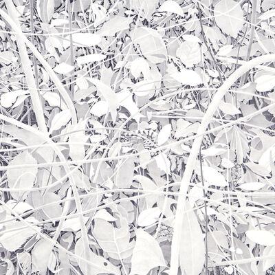 Bill Richards, 'Bending Branches ', 2014