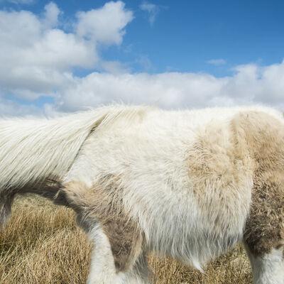 Cig Harvey, 'Dartmoor Pony and Sky, Devon, England', 2013