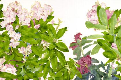 Gary Bukovnik: Forever Spring
