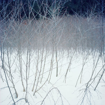 Debra Bloomfield, 'Wilderness 34717-10-08', 2008