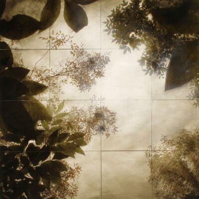 John Folsom, 'Canopy #17', 2012