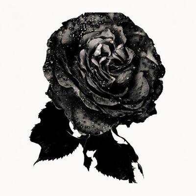 Nick Knight, 'Black Rose', 1993