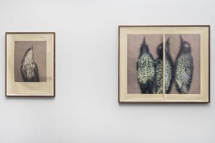 Ann Hamilton: New Work