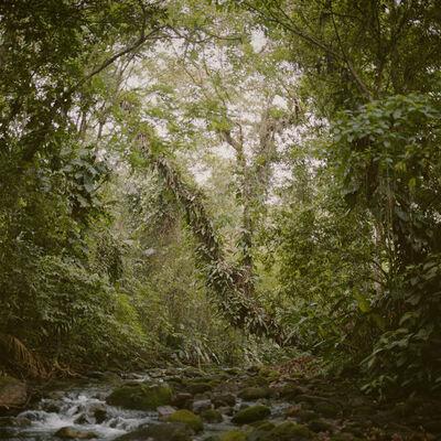 Mona Kuhn, 'Virgin Forest', 2009