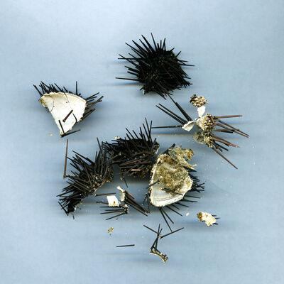 Tanja Hollander, 'Travel ephemera still life 741, Sea Urchin (Koufonissi, Greece)', 2011-2016