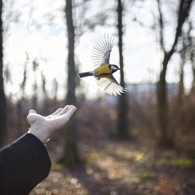 Cig Harvey, 'The Goldfinch, Saint Petersburg, Russia', 2014