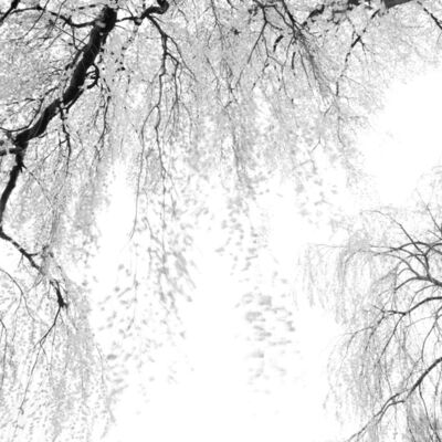 Toshio Enomoto, '010 - Weeping Cherry Trees by Katsuma Yakushi Hall in Takato', 2007
