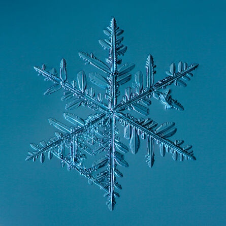Douglas Levere, 'Snowflake2015.02.22.002.1', 2015