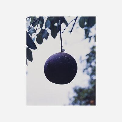 Roe Ethridge, 'Orange Grove #7', 2004