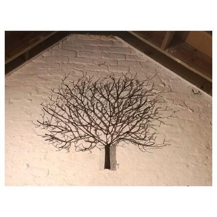 Bruno Plaghki, 'Tree Wall', 2020