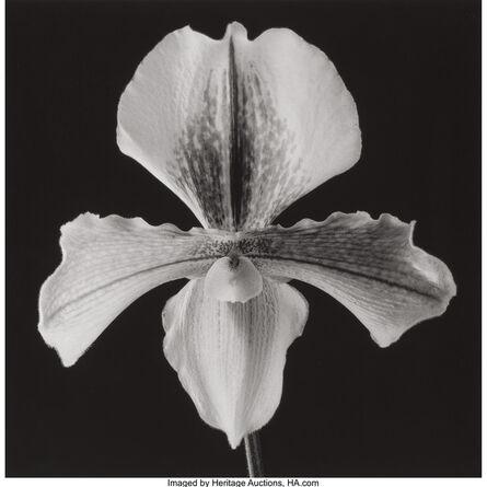 Robert Mapplethorpe, 'Orchid', 1988