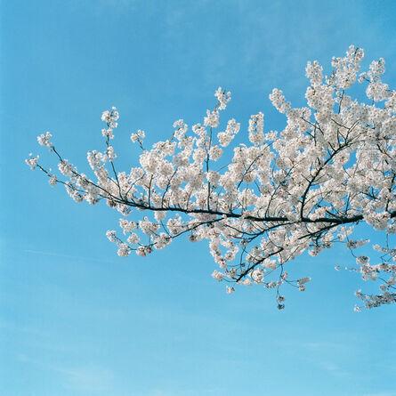 Sally Gall, 'Blossom #18', 2005