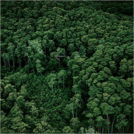 James Fee, 'Japanese Trees', 2001