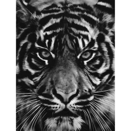 Robert Longo, 'Tiger', 2014