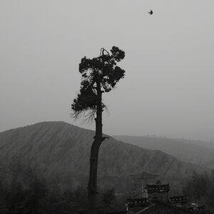 Hai Bo, 'The Southern Series No. 24', 2012
