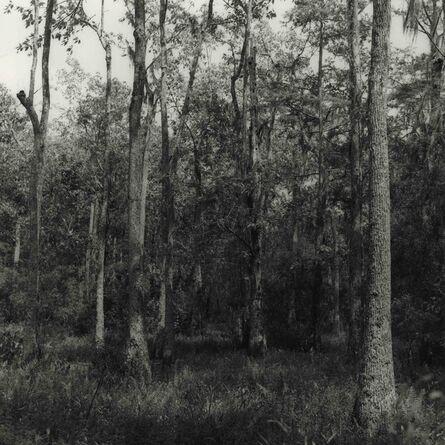Ken Rosenthal, 'Shine', 2010